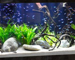 Aquarium en PMMA sur mesure