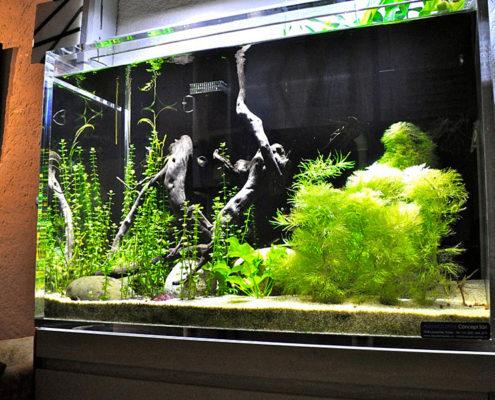 Aquarium Acrylique sur mesure eau douce